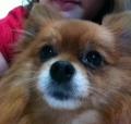 Jessie, Lulu da Pomerânia